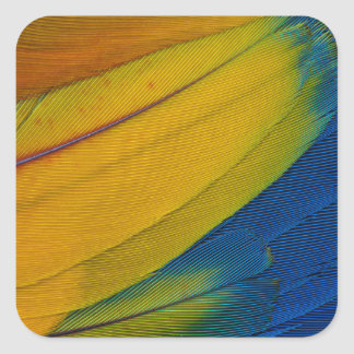 Scarlet Macaw Feathers Close-Up Square Sticker