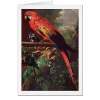 Scarlet Macaw in a Landscape (oil on canvas) Card