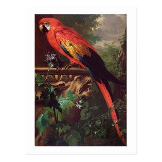 Scarlet Macaw in a Landscape (oil on canvas) Postcard