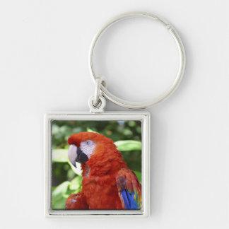 Scarlet Macaw Key Ring