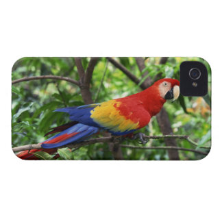 Scarlet macaw on tree limb Case-Mate iPhone 4 case