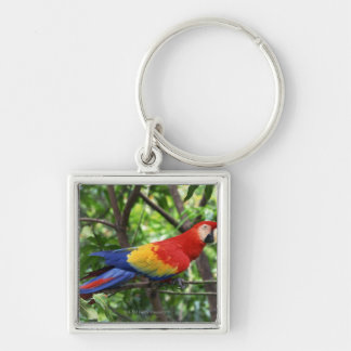 Scarlet macaw on tree limb key ring