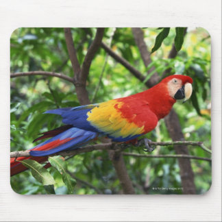 Scarlet macaw on tree limb mouse mat