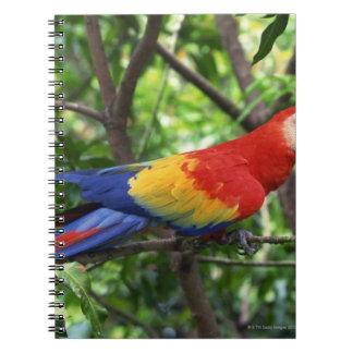 Scarlet macaw on tree limb notebooks