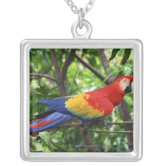 Scarlet macaw on tree limb silver plated necklace