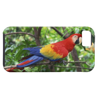 Scarlet macaw on tree limb tough iPhone 5 case