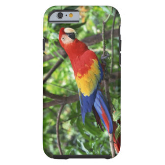 Scarlet macaw on tree limb tough iPhone 6 case