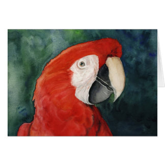 """Scarlet Macaw"" Original Art Notecard"