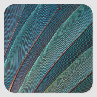 Scarlet macaw parrot feather square sticker