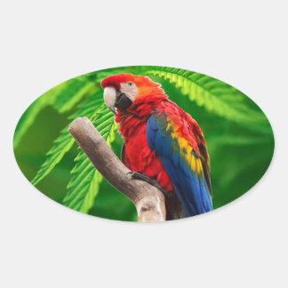 scarlet macaw peace love oval sticker