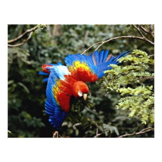 Scarlet macaw personalized flyer