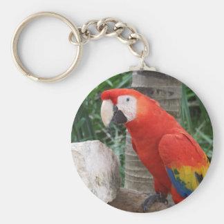 Scarlet Macaw Photography Keychain