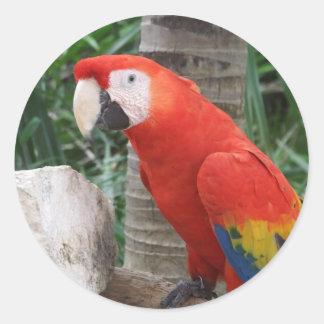 Scarlet Macaw Photography Round Sticker