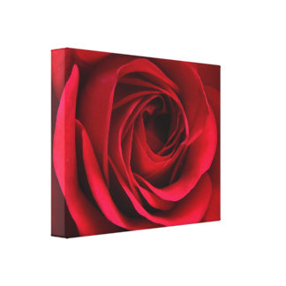 Scarlet Red Rose Canvas Canvas Print