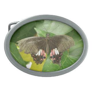 Scarlet Swallowtail Butterfly Belt Buckle