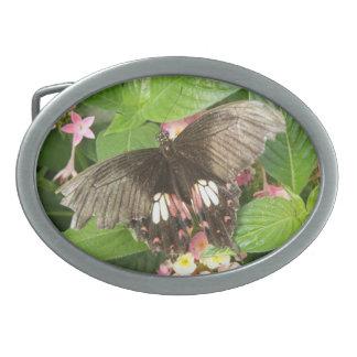 Scarlet Swallowtail Butterfly Macro Belt Buckle