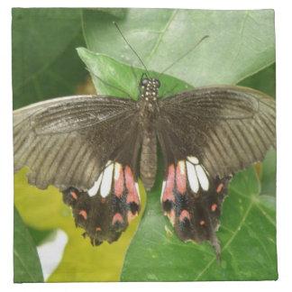 Scarlet Swallowtail Butterfly Napkin