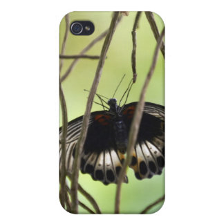 Scarlet Swallowtail butterfly (Papilio iPhone 4/4S Cover