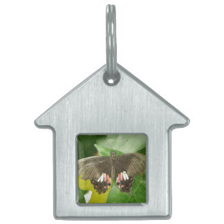 Scarlet Swallowtail Butterfly Pet Tag