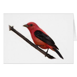 Scarlet Tanager on Branch Card