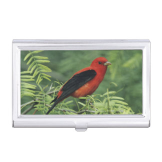 Scarlet Tanager, Piranga olivacea,male on Business Card Holder
