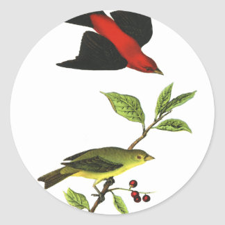 Scarlet Tanager Stickers