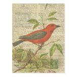 Scarlet Tanager Vintage Bird Birdcage Dragonfly