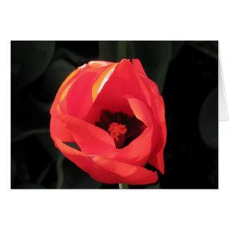 Scarlet Tulip Note Card