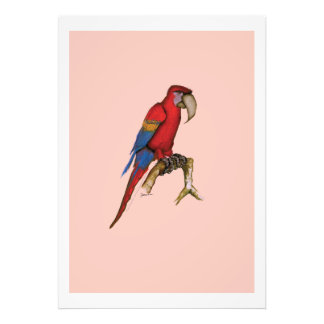 scarlett macaw, tony fernandes photograph