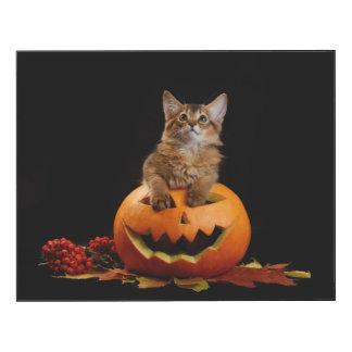 Scary Halloween Pumpkin And Somali Kitten