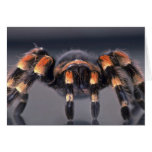 Scary Tarantula spider Greeting Cards