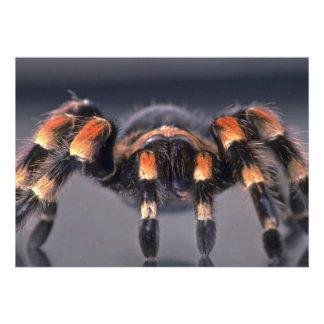 Scary Tarantula spider Personalized Invite