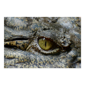 Scary Yellow Eye of Crocodile Poster