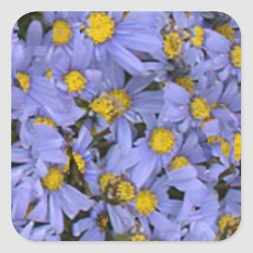 Scattered bunch of blue daisies, very pretty! square stickers