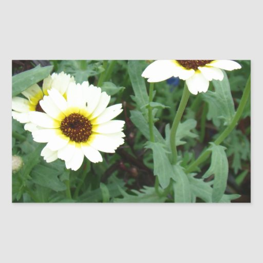 Scattering of Daisies Stickers