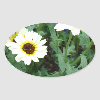 Scattering of Daisies Oval Stickers
