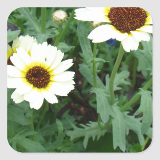 Scattering of Daisies Square Sticker