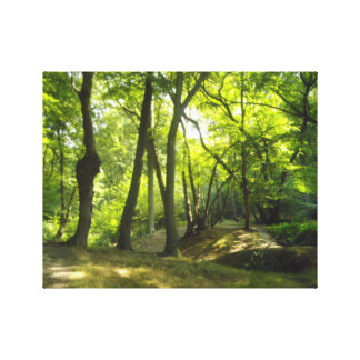 Scene of the woods canvas print
