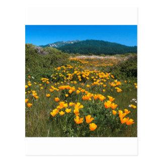 Scene Yellow Brick Road California Poppies Post Card