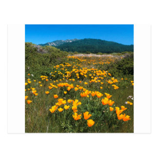 Scene Yellow Brick Road California Poppies Postcards