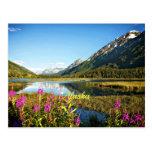 Scenic Alaska, Labelled Postcard