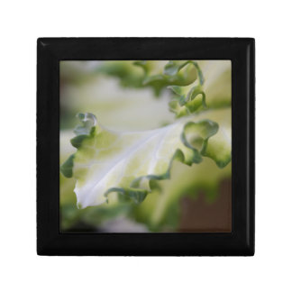 scenic leaf gift box