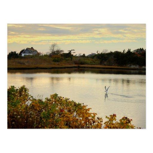 Scenic Nature Postcard