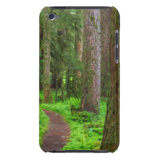 Scenic of old growth forest barely there iPod covers