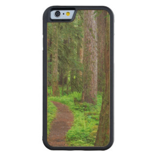 Scenic of old growth forest carved maple iPhone 6 bumper case