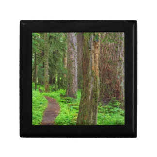 Scenic of old growth forest gift box