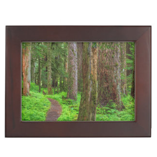 Scenic of old growth forest keepsake box