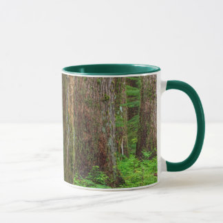 Scenic of old growth forest mug
