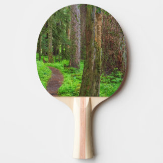 Scenic of old growth forest ping pong paddle