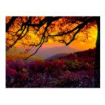 Scenic Shenandoah National Park Postcard